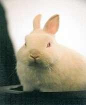 "Aberdeen magician Garry Seagraves ""Magic"" white rabbit"